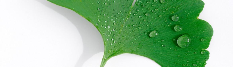 Werbefotografie Studio Oberfranken Ginkoblatt mit Wassertropfen auf weißem Hintergrund. Feigfotodesign