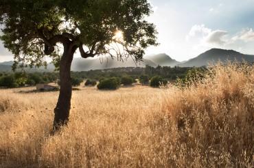 Sonnenuntergang über Serra de Tramuntana Gebirge mit Blick auf Baum und Felder. Feigefotodesign