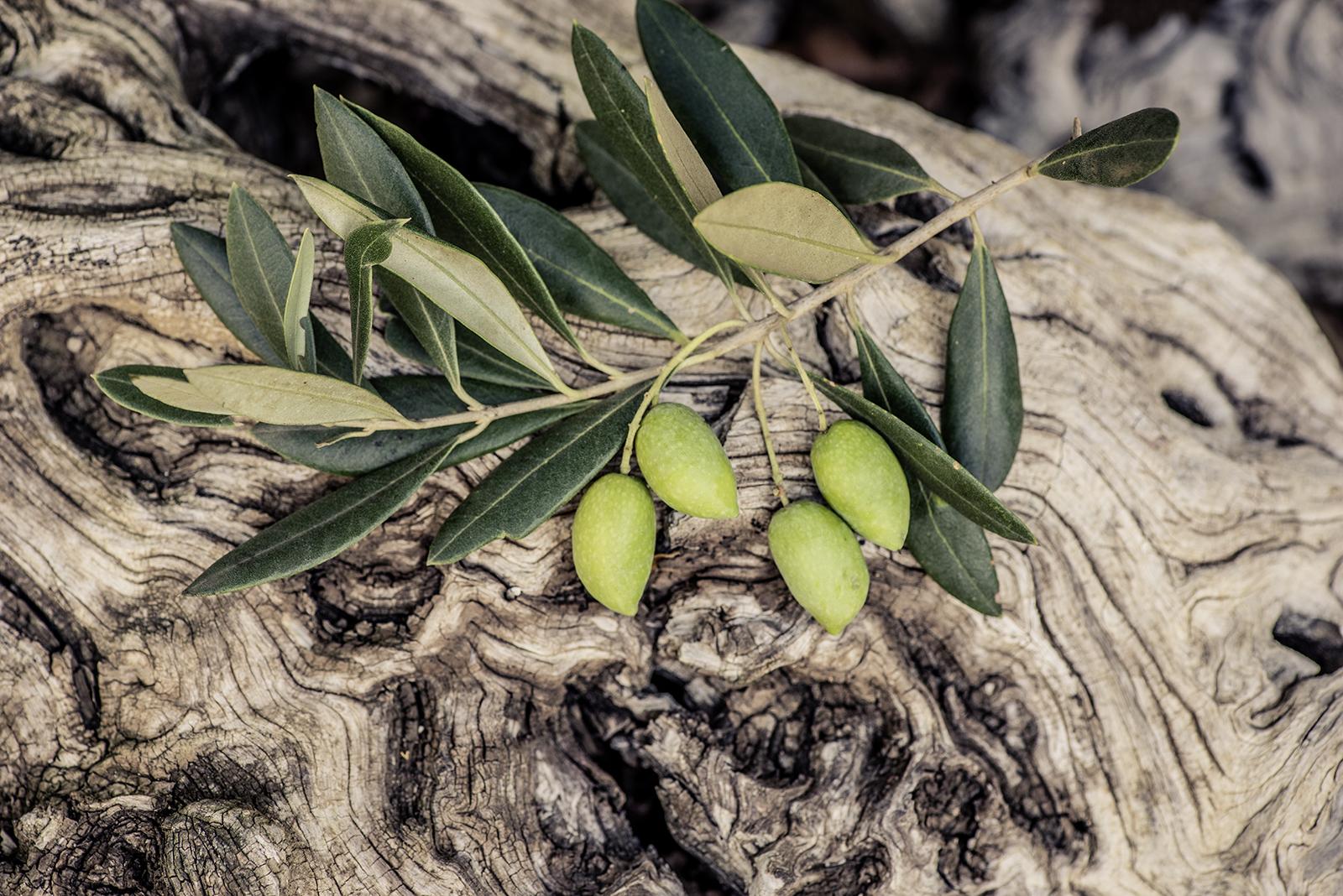 olivenzweig liegt auf olivenholz
