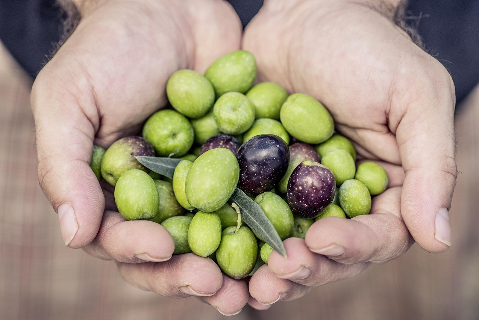 Eine Hand voll Oliven