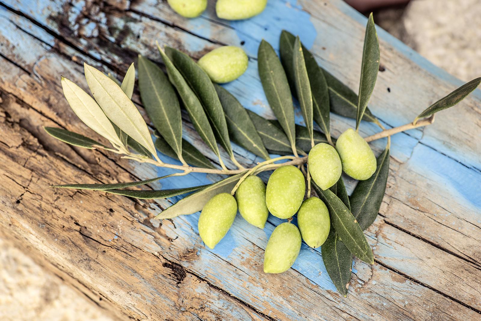 Olivenzweig liegt auf Treibholz